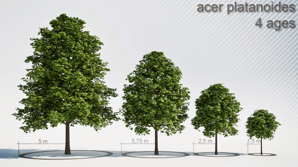 Download 33 tree models free for commercial use | CG Channel