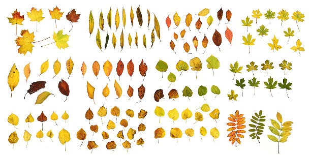 Download over 200 free photo-scanned leaf textures | CG Channel